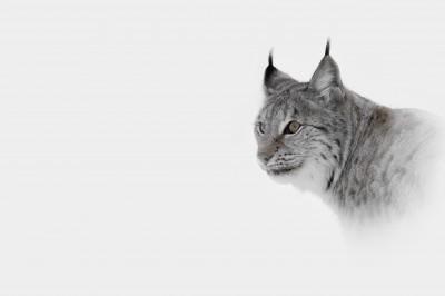Seguro-cotos-caza