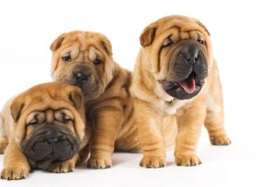 seguro-responsabilidad-civil-animales-domesticos