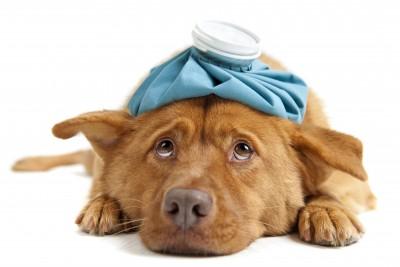 seguro-todo-riesgo-mascotas